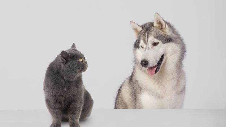 飼うなら犬?猫?