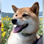共働きで飼うならどの犬種?