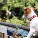 濃溝の滝・亀岩の洞窟(千葉県君津市)~子犬とおでかけ~