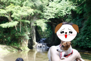 濃溝の滝写真スポットのテバちゃん