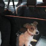 子犬と車でお出かけ!初ドライブ!初ホームセンター!