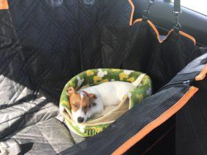 車に設置したベッドで寝る子犬テバちゃん