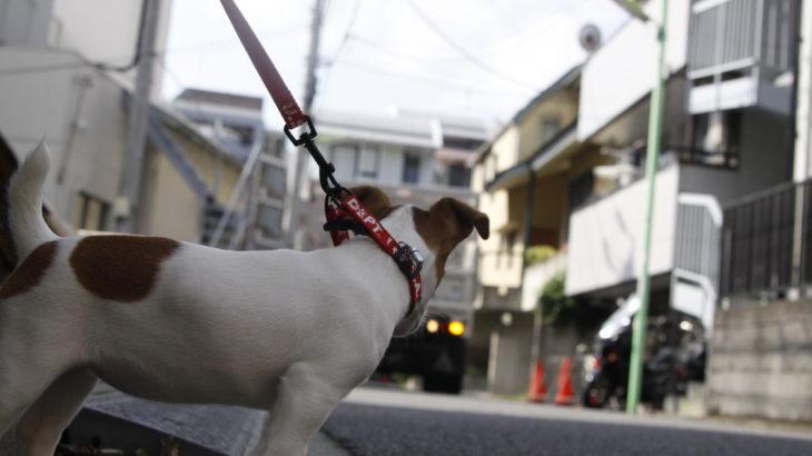 初めてのお散歩!子犬は意外なものが怖い?!