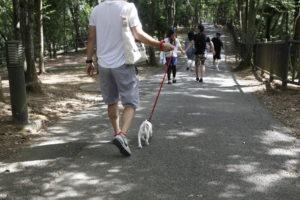 濃溝の滝遊歩道のJRTテバちゃん