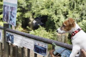 濃溝の滝の上からの眺めとテバちゃん