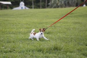 辻堂公園で走る子犬テバちゃん
