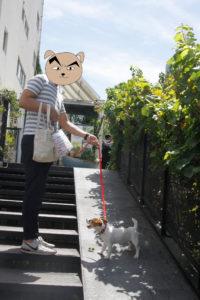 代々木VILLAGE2Fへの階段を上る子犬テバちゃん