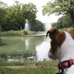代々木公園(東京都渋谷区)~子犬とおでかけ~