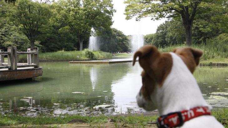 噴水池を眺める子犬テバちゃん