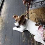 anea cafe SANGUBASHI/アネアカフェ参宮橋(東京都渋谷区)~子犬とおでかけ~