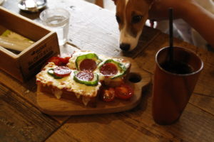 ピザトーストとコーヒーと子犬テバちゃん