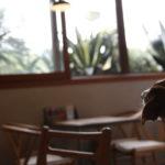 cafe imagine / カフェイマジン(東京都世田谷区)~子犬とおでかけ~