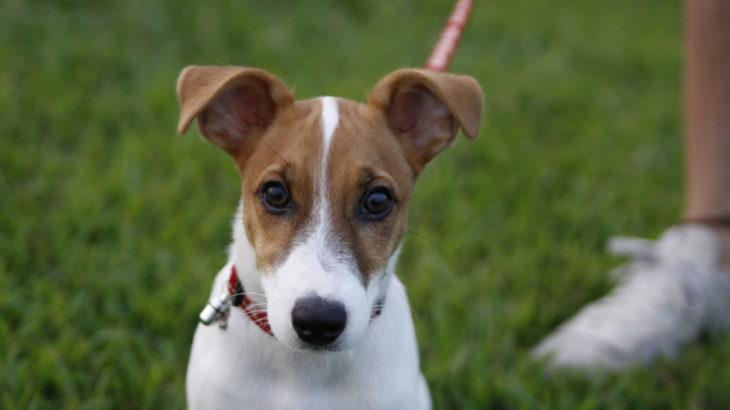 芝で大満足の子犬テバちゃん