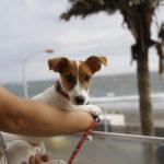 MERCI CAMP!/メルシーキャンプ(神奈川県鎌倉市)~子犬とおでかけ~