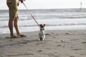海をバックにたたずむ子犬テバちゃん