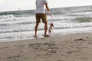 初めて波に足を踏み入れる子犬テバちゃん