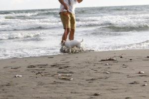 波に少し押され気味の子犬テバちゃん