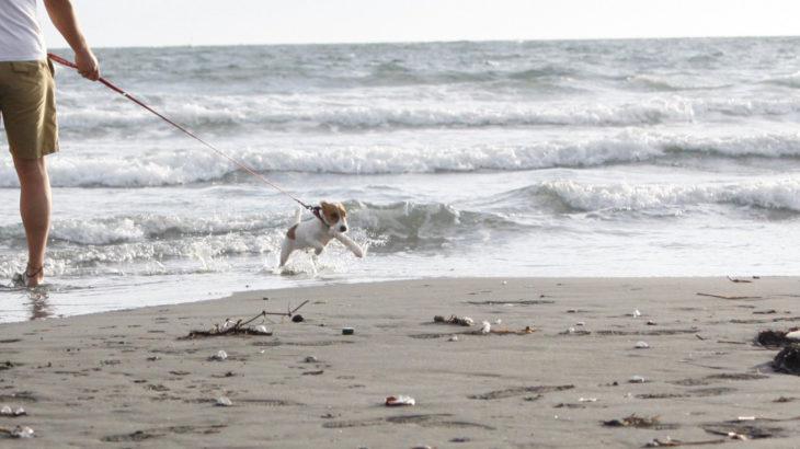 材木座海岸(神奈川県鎌倉市)~子犬とおでかけ~