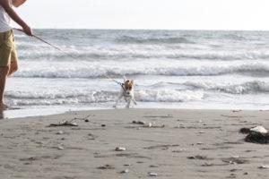 波から逃げる子犬テバちゃん