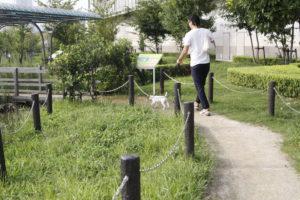 豊洲ビオガーデンを歩く子犬テバちゃん