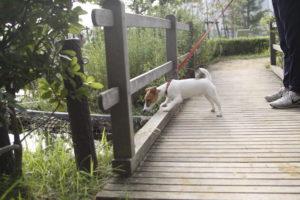 池をのぞき込む子犬テバちゃん