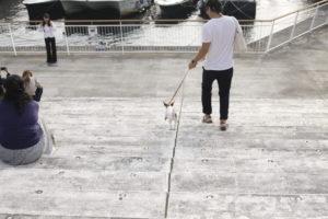 船に向かって階段を降りる子犬テバちゃん