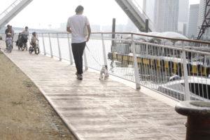 アーバンゲートブリッジと子犬テバちゃん