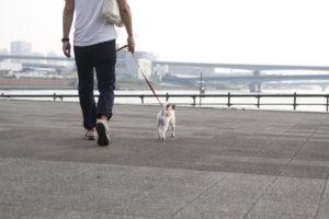 春海橋公園の子犬テバちゃん