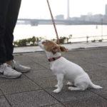 ILIO/イリオ ららぽーと豊洲店(東京都江東区)~子犬とおでかけ~