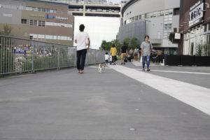 ららぽーと豊洲に戻る子犬テバちゃん