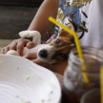 Mr.FARMER/ミスターファーマー 駒沢オリンピック公園(東京都世田谷区)~子犬とおでかけ~