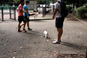 駒沢公園ドッグラン前の子犬テバちゃん