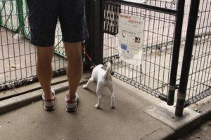 駒沢公園ドッグラン入口の子犬テバちゃん