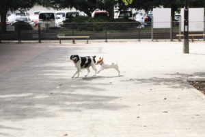 ドッグランで他犬と初絡みの子犬テバちゃん