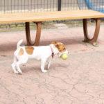 駒沢オリンピック公園(東京都世田谷区)~子犬とおでかけ~