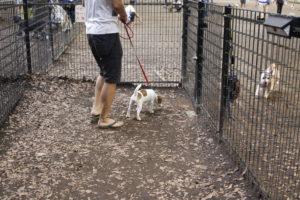 代々木公園ドッグラン小・中型犬エリア入り口の子犬テバちゃん