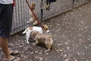代々木公園ドッグランで挨拶する子犬テバちゃん