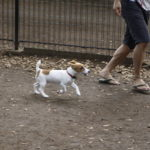 代々木公園ドッグラン(東京都渋谷区)~子犬とおでかけ~