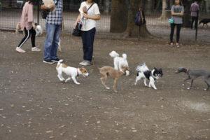 同サイズのお友達と遊ぶ子犬テバちゃん