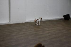 他の犬に駆け寄る子犬テバちゃん