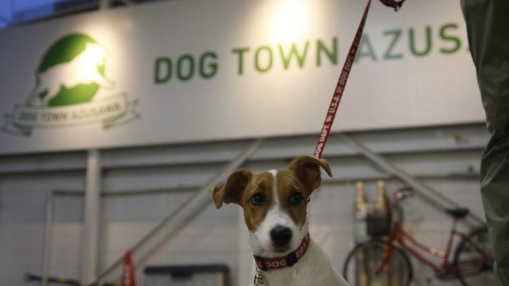 DOG TOWN AZUSAWA/ドッグタウン小豆沢(東京都板橋区)~子犬とおでかけ~