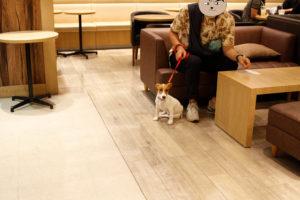 ソファ席の子犬テバちゃん