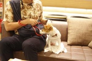 ソファ席に座る子犬テバちゃん
