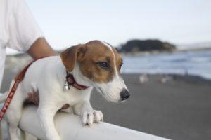 江の島の海と子犬テバちゃん