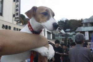 江の島で穏やかな表情の子犬テバちゃん