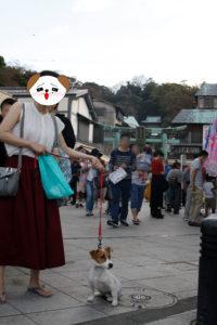 江の島参道前の子犬テバちゃん