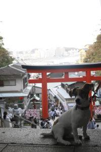 江の島中腹の子犬テバちゃん