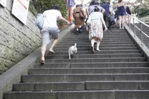 参道を駆け上がる子犬テバちゃん