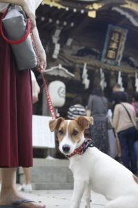 江島神社奉安殿の子犬テバちゃん