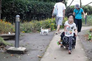 みどりの広場の子犬テバちゃん